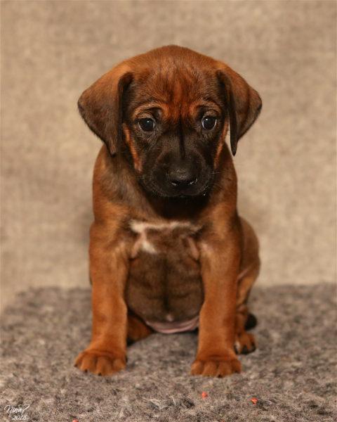Lola 5 weeks