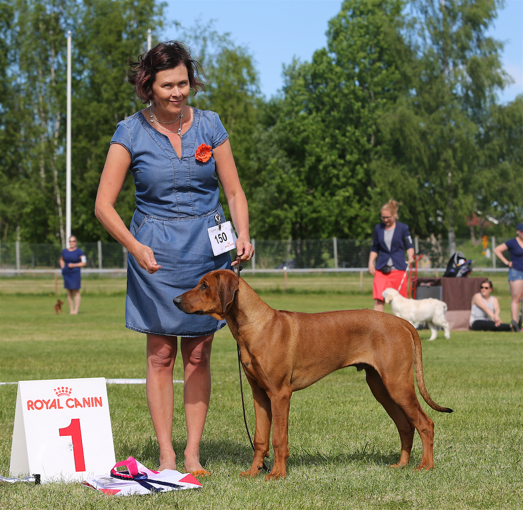 BOB and BIG-1 in Helsinki Puppy Show 27.5.2018
