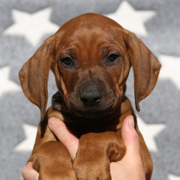 Holger 6,5 weeks